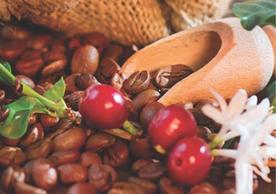 Coffee: Farm Farm to Filter